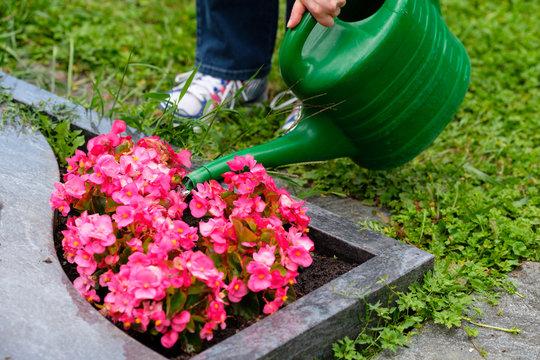 Frau gießt mit einer Gießkanne Blumen auf dem Friedhof