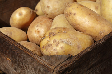 Big new potato in vintage wooden box close up