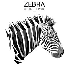 Zebra animal low poly design. Triangle vector illustration.