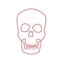 skull human head bone medicine concept vector ilustration