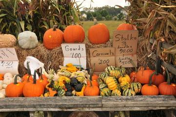 Fall display of pumpkins