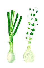 Green onions whole and cut isolated on white watercolor illustration