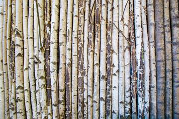 Many birches. Wall IZ stem birches.