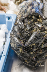 Mussels in a net at the fish market