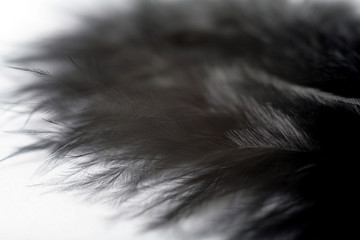 Black feather natural texture closeup, soft tender macro feather