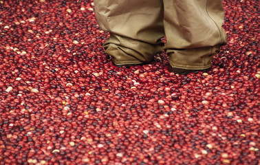 Working in a Cranberry Bog