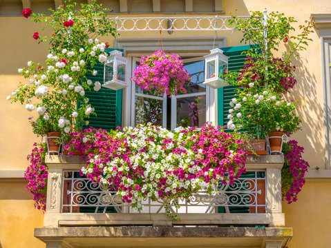 Balcony plant and flower pots garden with colored boxes nature Italian trellis