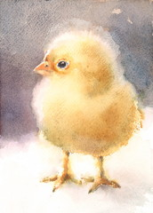 Watercolor Bird Baby Chicken Cute Easter Card Illustration Hand Drawn