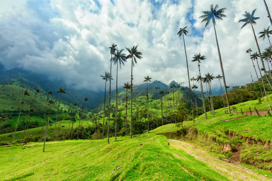 Green pasture in the Cocora Valley near Salento, Colombia.
