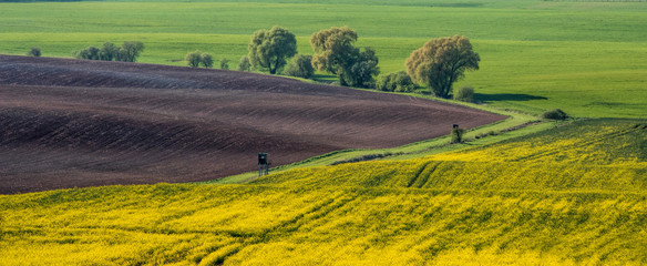 Rapeseed, cereal and plowed fields