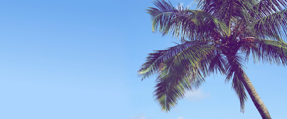 palm tree background blue clear sky