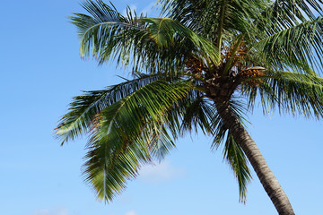 palm tree background blue clear sky in Thailand