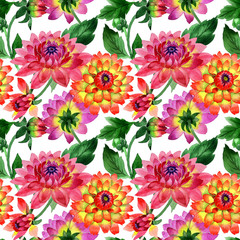 Wildflower dahlia flower pattern in a watercolor style isolated.