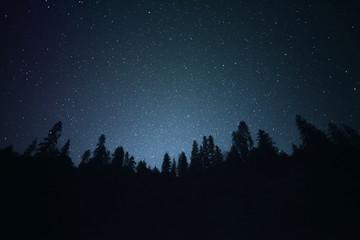 Starry Night |  Night Silhouette Tree Line