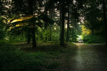 beautiful sunset in the woods, romantic peaceful rural landscape scene