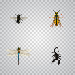 Realistic Damselfly, Midge, Poisonous And Other Vector Elements. Set Of Insect Realistic Symbols Also Includes Damselfly, Wisp, Gnat Objects.
