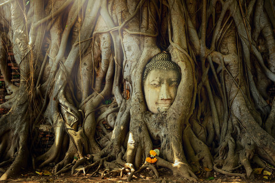 Amazing sand stone buddha head in tree root in Mahathat temple, Ayutthaya, Thailand, UNESCO,Thailand temple