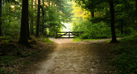 romantic landscape - wooden gate in the forest among soft, natural morning light