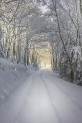 Weg im verschneiten Wald
