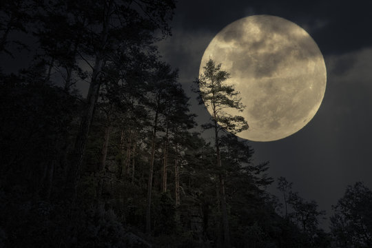 Mountain forest in a full moon night