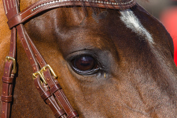 Horse Head Eye Closeup