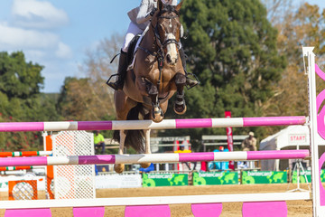 Rider Horse Jumping Poles Abstract Unidentified
