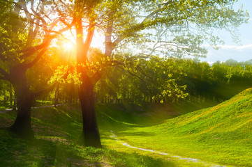 Summer landscape at summer sunset - sunny colorful summer nature