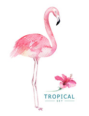 Hand drawn watercolor tropical birds set of flamingo. Exotic bird illustrations, jungle tree, brazil trendy art. Perfect for fabric design. Aloha set