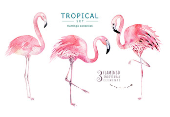 Hand drawn watercolor tropical birds set of flamingo. Exotic bird illustrations, jungle tree, brazil trendy art. Perfect for fabric design. Aloha set