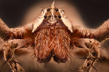 Extreme magnification - Huntsman spider