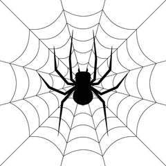 Spider. Web. Vector.