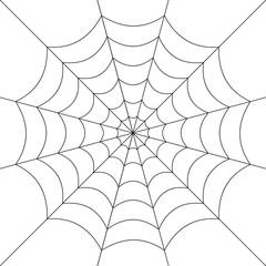 Spider web. Vector.