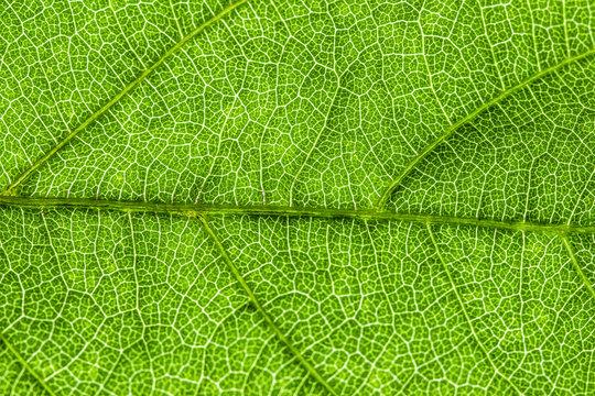 green leaf, macro, zoom blur