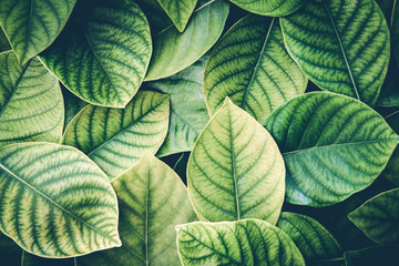 the Fresh tropical Green leaves background , retro vintage colortone