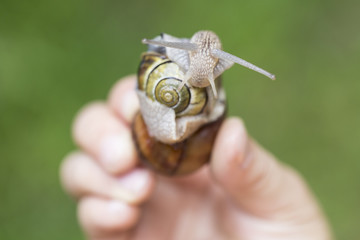 ślimak na liściu