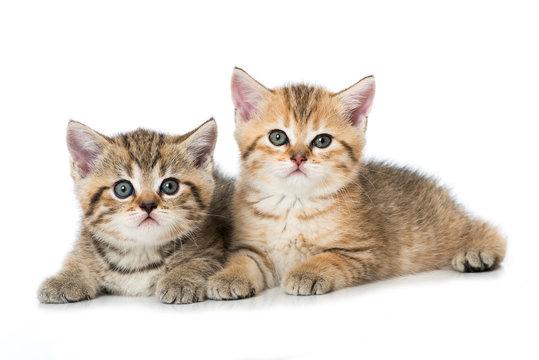 Zwei Kätzchen