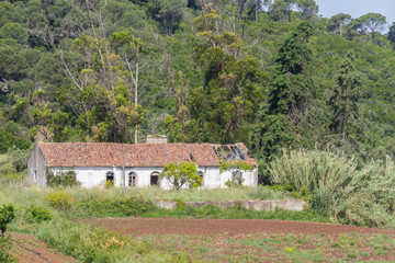 Abandoned farm house and plantation in Santiago do Cacem