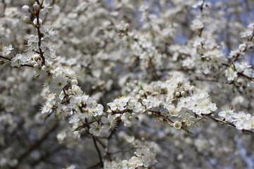 Lovely spring flowers.