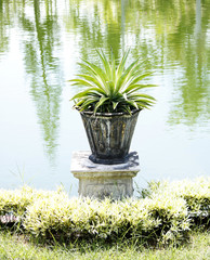 A small tropical plant with broad leaves in a ceramic pot on a stand near a pond in a warm summer park