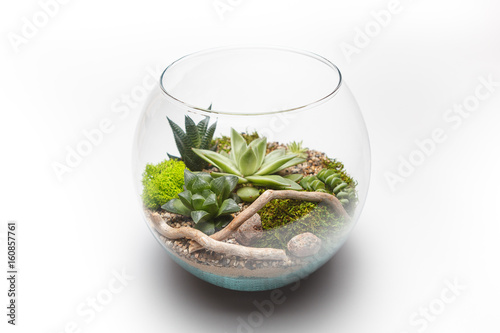 Succulent Arrangement In A Glass Vase Terrarium Stock Photo And