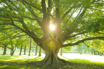 公園 木 夕日
