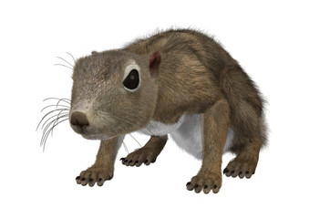 3D Rendering Gambian Sun Squirrel on White