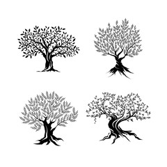 Beautiful magnificent olive tree silhouette isolated on white background.