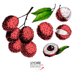 Vector hand drawn set of exotic fruits. Isolated lychee fruit. Engraved colored art. Delicious tropical vegetarian objects.