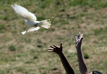 A priestess releases a dove as she attends the Olympic flame lighting ceremony for the Rio 2016 Olympic Games inside the ancient Olympic Stadium on the site of ancient Olympia