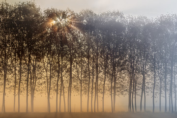 Turin province, Piedmont,Italy, Europe. Magic sunrise in the Piedmont plain