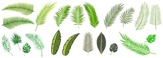 palm leaves compilation in many different styles