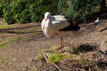 Storch auf einem Bein