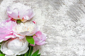 pink peonies flowers on white wooden background
