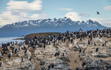 Cormorants (sea birds) island - Beagle Channel, Ushuaia, Argentina